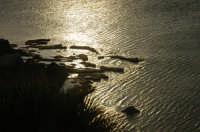 Capo Gallo riserva naturale tramanto 2007 PALERMO Francesco Liotti