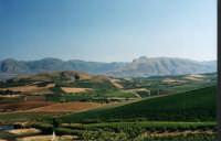 San Cipirello_ campagna  - San cipirello (5370 clic)