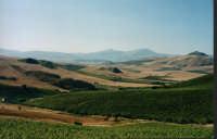 San Cipirello_località Montaperto Arcivocale  - San cipirello (5119 clic)