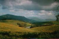 paesaggio lungo la statale 121   - Roccapalumba (6238 clic)