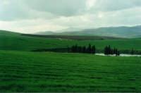 La verde campagna della Valle dello Iato  - San giuseppe jato (4962 clic)