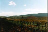 La verde campagna della Valle dello Iato  - San giuseppe jato (4788 clic)