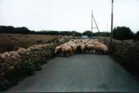 traffico per le strade di Favignana  - Favignana (3032 clic)