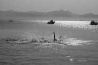 nuotatore  - Mongerbino (3455 clic)