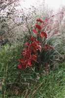 Nel bosco die Sicilia in montagna di Termini, un ramo della quèrcia.  - Termini imerese (3442 clic)