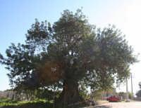 Stafenna  - Rosolini (3150 clic)