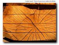 quercia, legno utilizzato per la costruzione dei pescherecci  - Licata (2445 clic)