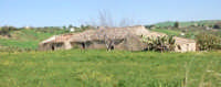 Panorama agricolo http://www.filippocapizzi.it  - Assoro (3692 clic)