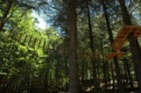 Parco Avventura Madonie in località Gorgonero  - Petralia sottana (7579 clic)