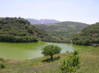 La Diga Gammauta ai bordi del bosco Adriano    - Palazzo adriano (10631 clic)