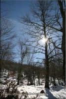 Paesaggio invernale, anno 2008  - Caronia (7070 clic)