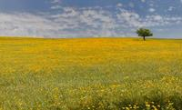 solitario in mezzo al campo   - Enna (1660 clic)