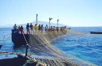 Un momento della mattanza del tonno  - Bonagia (4966 clic)