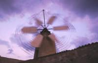 Un tipico mulino a vento nelle saline di trapani  - Trapani (5710 clic)