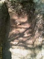 Aldo, uno scheletro nella necropoli di Gaspa  - Villarosa (4019 clic)