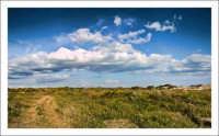 Un bel pomeriggio a mare  macchia medeterranea antistante la spiaggia di Marina di Butera, fra Gela e Licata.  - Gela (5405 clic)