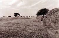 Le rotonballe della campagna iblea  - Ragusa (2212 clic)