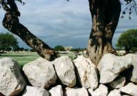 Il muro a secco e la campagna ragusana  - Iblei (11379 clic)
