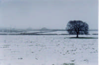 Un gelido inverno  - Ragusa (2325 clic)