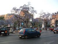 Piazza Politeama,alberi in fiore e traffico cittadino. PALERMO Paolo Naselli