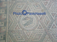 Villa Romana del Casale: mosaico con motivo geometrico e pesci.  - Piazza armerina (3579 clic)