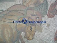Villa Romana del Casale: mosaico con scene di  animali.  - Piazza armerina (1911 clic)