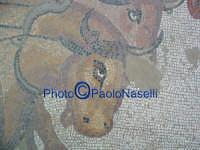 Villa Romana del Casale: mosaico con scene di  animali-particolare.  - Piazza armerina (2810 clic)