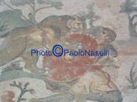 Villa Romana del Casale: mosaico con scene di caccia-2.  - Piazza armerina (1903 clic)