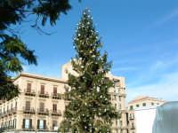 Natale 2003:abete addobbato a Piazza Politeama. PALERMO Paolo Naselli