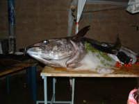 Tonnara di Avola:festa del tonno  - Avola (6581 clic)