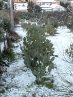 Nevicata del 26-01-2005, fichdindia...al freddo sopra contrada Acquanova.  - Villarosa (3185 clic)