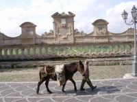 contadino che va in campagna  - Leonforte (3431 clic)