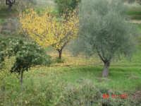 campagna autunnale  - San michele di ganzaria (2379 clic)