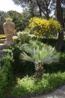 Colori di Sicilia  - Caltagirone (5551 clic)