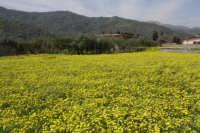 Primavera nella valle d'Agrò  - Casalvecchio siculo (7590 clic)