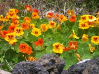 Primavera  - Santa tecla (4210 clic)
