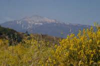 Etna e Ginestra  - Novara di sicilia (7446 clic)