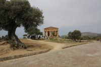 Temio della Concordia  - Agrigento (3804 clic)
