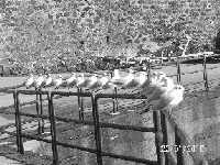 Gabbiani al sole  - Stazzo di acireale (6668 clic)