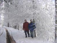 Pineta Rocca Saracena . Febbraio 2009  - Montagnareale (7158 clic)
