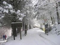 Pineta Rocca Saracena sotto la neve .Febbraio 2009  - Montagnareale (5253 clic)