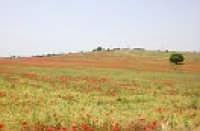 panorama agricolo  - Monterosso almo (1957 clic)