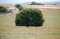 panorama agricolo  - Monterosso almo (2087 clic)