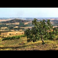 campagne siciliane. sicilian summer landscape  - Valderice (5462 clic)
