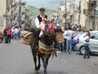 tipica cavalcatura bardata per la festa deiRami   - Troina (3577 clic)