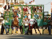 Maggio 1991 Floridia. Il bravissmo plurivittoriso  fantino avolese Antonio De Luca,disarcionato dal suo cavallo alla partenza  - Floridia (4189 clic)