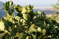 panorama di palermo  - Giacalone (3348 clic)