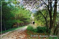 SENTIERO PARCO FORESTALE SERRAROSSA  - Monterosso almo (4893 clic)