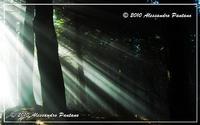 contro luce nel parco forestale canalazzo !!!! dentro il bosco !!!!!   - Monterosso almo (4811 clic)