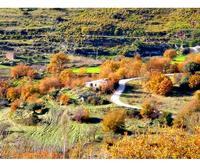 Colori degli alberi a monterosso almo   (3565 clic)